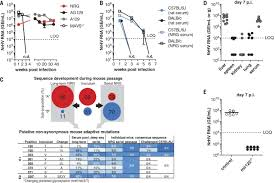 mouse models of acute and chronic hepacivirus infection science