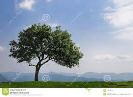 tree high in the mountains stock photos image 11013673