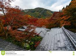 forest of maple trees in fall color rising above temple rooftops
