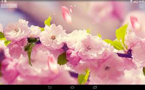 google images flower flowers 3d live wallpaper android apps on google play