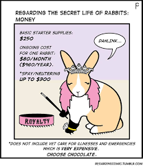 20 fascinating facts rabbits care2