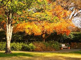Fall Garden Plants Texas - 7 best dallas arboretum images on pinterest dallas fall leaves