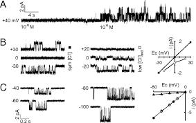 functional prokaryotic u2013eukaryotic chimera from the pentameric