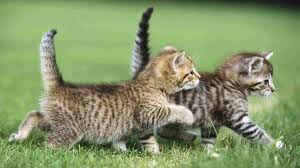 cute sayings about cats funny cat u0026 dog pictures