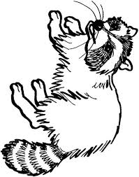 animal kingdom colouring book raccoon images millie