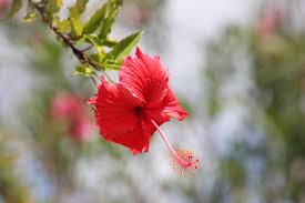 imagenes flores relajantes fotos gratis naturaleza hoja pétalo rojo otoño botánica