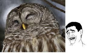 Owl Memes - more owl memes by wd deathstar morty on deviantart