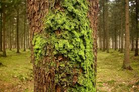 moss may be big data s new canary in the coal mine u penn social book