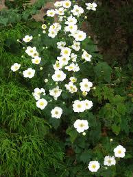arkansas native plant society arkansas from lynn u0027s garden