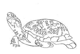 100 sea turtle coloring download print sea turtle