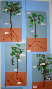 56 best creative curriculum tree study ideas images on
