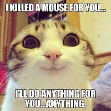 Mean Kitty Meme - really little kitty ok let me get my kill i mean to do list
