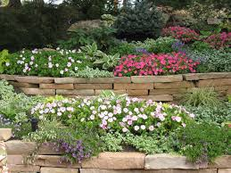 colorful flower plants for backyard or front yard landscaping