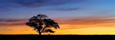 the sunset tree panorama golden hours photos australianlight