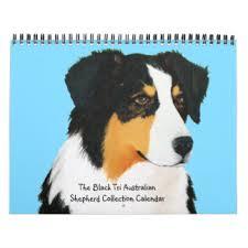 australian shepherd tri australian shepherd calendars zazzle