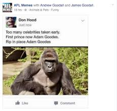 Funny Gorilla Meme - afl memes post harambe the gorilla know your meme