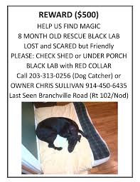 8 month old black lab rescue is missing in ridgefield