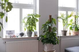 Wohnzimmer Winterlich Dekorieren Deko Fensterbank Wohnzimmer Alle Ideen Für Ihr Haus Design Und Möbel