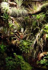 vivarium design and construction the world of frogs