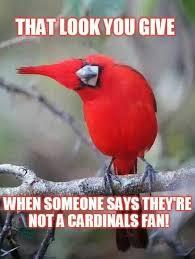 Arizona Memes - 12 awesome arizona cardinals memes dfs strategy
