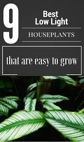 62 best gardens houseplants images on pinterest houseplants