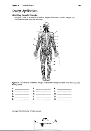 human muscle worksheet free coloring pages of human leg muscles