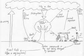 cartoon of carbon and nitrogen cycle by emmacollins teaching