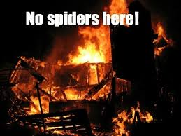 I Tried Killing A Spider - how to get rid of spiders naturally and keep them away for good