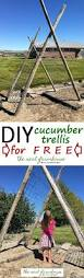 diy rustic cucumber trellis for free complete tutorial with
