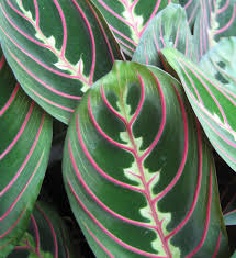 the tattooed gardener plants and pets non toxic houseplant