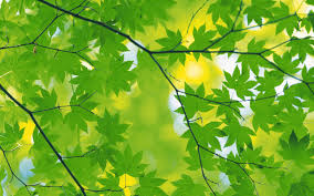 green leaf background hd wallpapers pulse