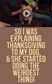 funny thanksgiving images 1322 best yorkie love images on pinterest yorkies animals and