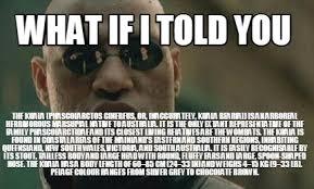 Meme Generator Koala - meme creator what if i told you the koala phascolarctos cinereus