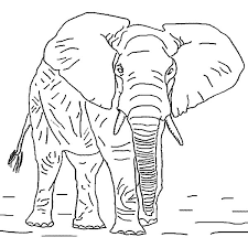 angry african elephant coloring pages coloring sky