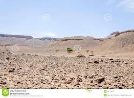 stone desert morocco draa valley stone desert and acacia tree stock image