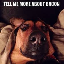 Dog Bacon Meme - 59 best bacon images on pinterest funny images bacon bacon and