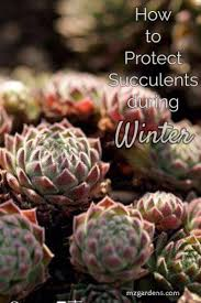 13 succulents that are native 378 best grow succulents images on pinterest plant bear and garden