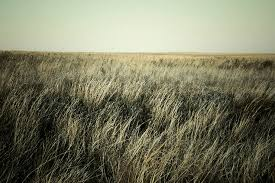 free stock photography pack no 1 prairie