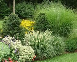 backyard garden with ornamental grasses ways to split ornamental