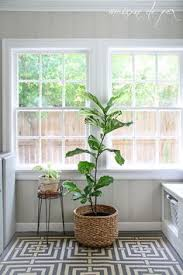 floor plants home decor 10 houseplants that actually clean the air you breathe empty