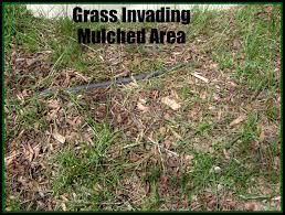 kill weeds organically natural green mom