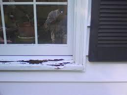windows rotten sill windows siding and doors contractor talk