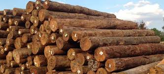 pine wood suppliers best pine wood logs importers dealers in india