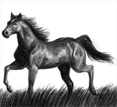 black and white sketches of horses horse sketch etsy drawing art