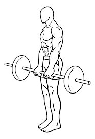 file barbell dead lifts 1 svg wikimedia commons