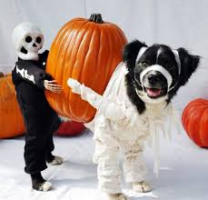 Chihuahua Halloween Costumes 33 Pets Halloween Costumes Flaunt Unique Halloween Style
