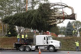 pennsylvania tree to adorn rockefeller center for new