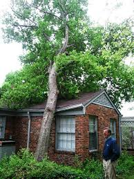 tree service for clarksville tennessee provided by tree service