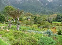 Kirstenbosch National Botanical Gardens by Kirstenbosch National Botanical Gardens Cape Town Park Forest