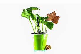 free images nature flower foliage vase herb houseplant